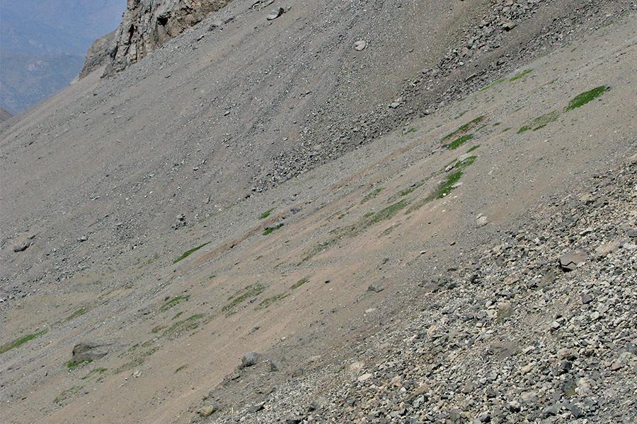 Matorral de Berberis empetrifolia