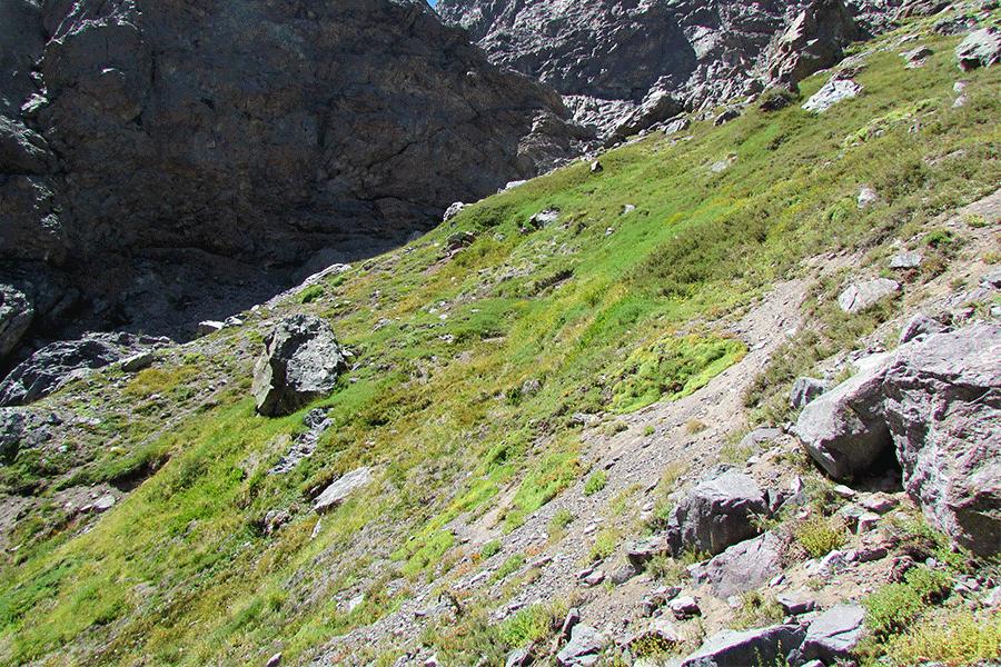 Herbazal de Carex banksii var. Gilliesii