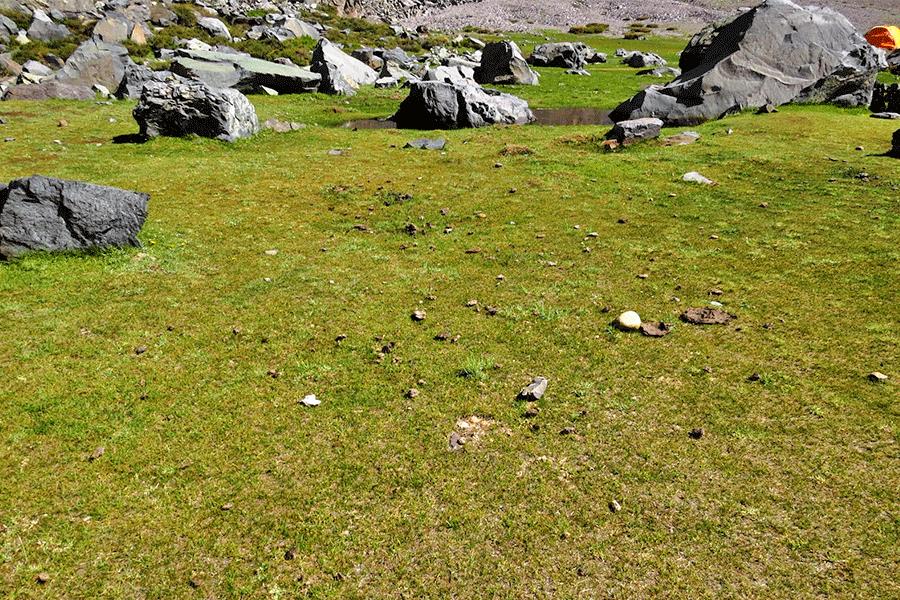 Herbazal de Carex maritima y Eleocharis pseudoalbibracteata