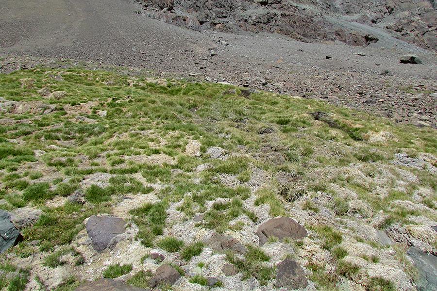 Herbazal de Deschampsia caespitosa y Deyeuxia chrysostachya