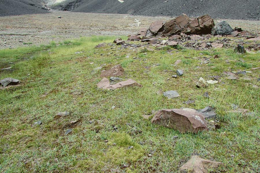 Herbazal de Poa acinaciphylla y Carex macloviana