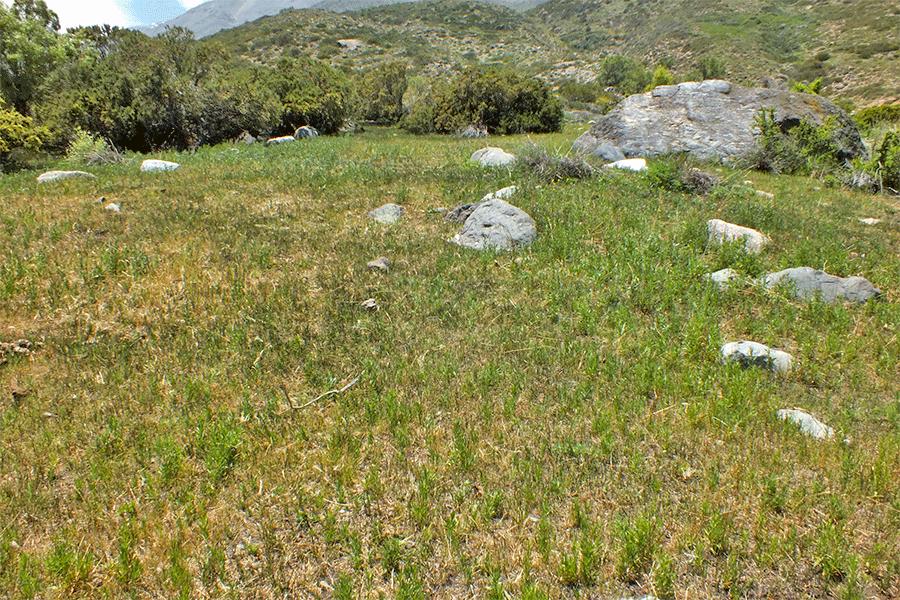 Herbazal de Juncus balticus