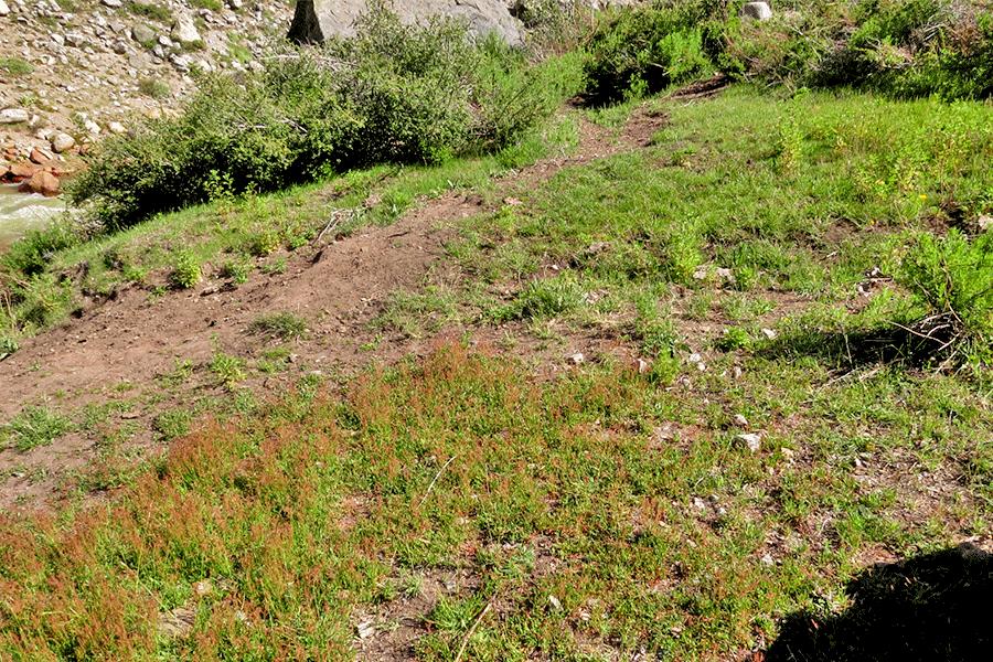 Herbazal de Juncus stipulatus y Carex gayana