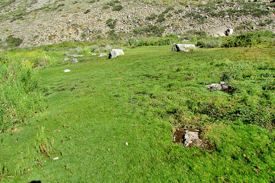 Herbazal de Juncus stipulatus y Phylloscirpus acaulis
