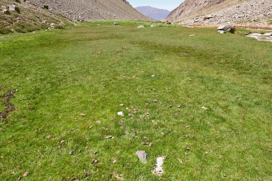 Herbazal de Poa acinaciphylla y Juncus stipulatus